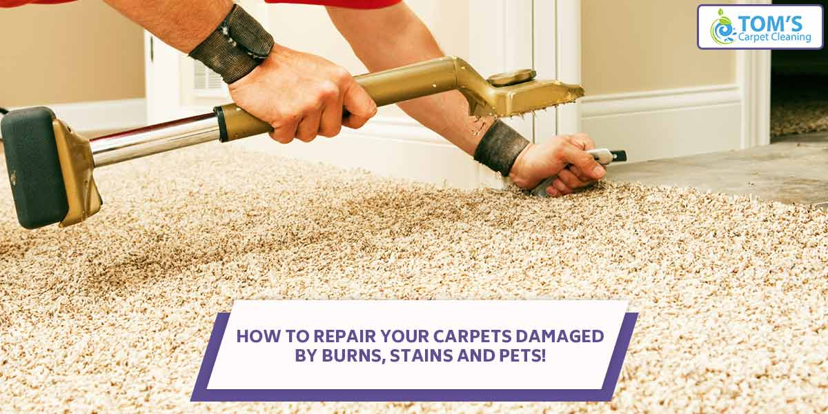 How To Repair Carpets Damaged By Burns, Stains And Pets!
